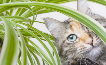 """Illustration : """"Qu'est-ce que la phytothérapie pour chat ?"""""""
