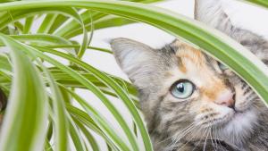 Illustration : Qu'est-ce que la phytothérapie pour chat ?