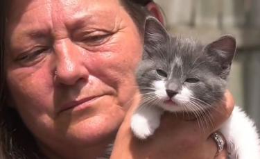 """Illustration : """"Une enquête ouverte après la découverte d'un chaton abandonné dans une boîte à dons"""""""