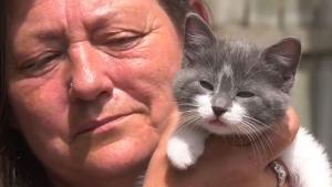 Illustration : Une enquête ouverte après la découverte d'un chaton abandonné dans une boîte à dons