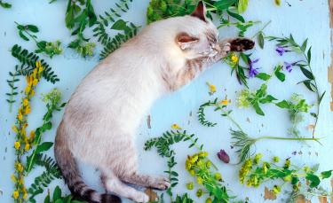 """Illustration : """"Dans quels cas utiliser la phytothérapie pour son chat ?"""""""