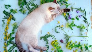 Illustration : Dans quels cas utiliser la phytothérapie pour son chat ?