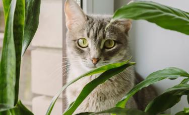 """Illustration : """"Les bienfaits de la phytothérapie pour chat"""""""