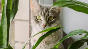 Illustration : Les bienfaits de la phytothérapie pour chat