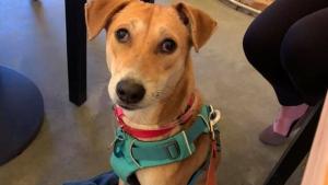 Illustration : Les péripéties d'un chien qui s'est perdu dans les rues de New York pendant une semaine (vidéo)