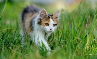 """Illustration : """"La phytothérapie pour prendre soin des articulations du chat"""""""