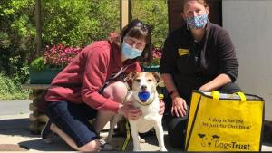 """Illustration : """"Un chien de 11 ans adopté pendant le confinement est ramené 9 mois plus tard au refuge. Il a attendu pendant 200 jours !"""""""