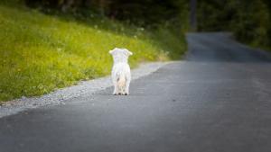 Illustration : Bruits effrayants pour le chien et le chat en été : quelle solution pour le retrouver facilement en cas de fugue ?