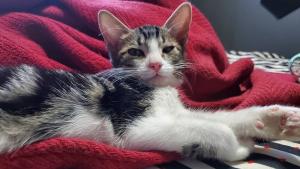Illustration : Un chat errant découvert dans un état catastrophique, apprend à marcher avec l'aide des bénévoles (vidéo)