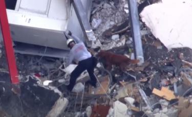 """Illustration : """"Effondrement d'un immeuble en Floride : des maîtres-chiens et chiens de sauvetage venus du monde entier pour apporter leur aide"""""""