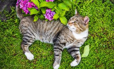 """Illustration : """"La phytothérapie pour renforcer les défenses naturelles du chat"""""""