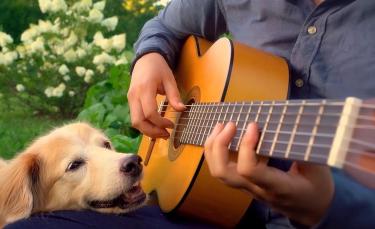 """Illustration : """"L'attendrissant hommage d'un guitariste à sa plus grande fan, une femelle Golden Retriever (vidéo)"""""""