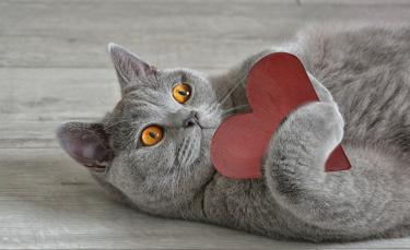 """Illustration : """"La phytothérapie pour entretenir le cœur du chat"""""""