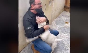 """Illustration : """"La vidéo poignante d'un chien exprimant sa joie et sa gratitude envers l'homme qui le libère"""""""
