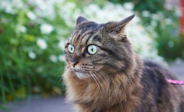 """Illustration : """"La phytothérapie pour traiter la nervosité et le stress du chat"""""""