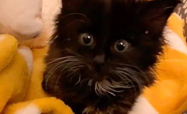 """Illustration : """"Un chaton placé dans un refuge dépérit de jour en jour. Une femme le découvre et fait tout pour lui redonner du courage (vidéo)"""""""