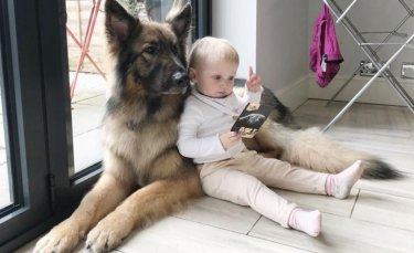 """Illustration : """"Un chien espiègle et désobéissant devient le grand frère le plus doux et le plus dévoué"""""""