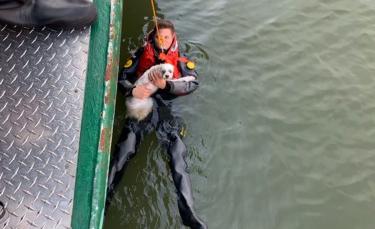 """Illustration : """"Double sauvetage : un propriétaire secouru par les pompiers après avoir tenté de récupérer son chien tombé dans une rivière"""""""