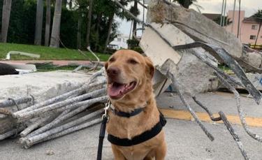 """Illustration : """"L'acte de bonté incroyable pour rapatrier un chien de soutien émotionnel blessé dans les décombres de l'immeuble détruit en Floride"""""""