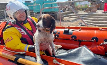 """Illustration : """"Des gardes-côtes lancent une mission pour retrouver un chien perdu en pleine mer (vidéo)"""""""