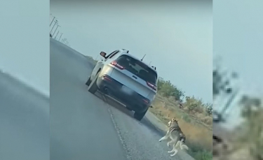 """Illustration : """"Une vidéo montre un Husky être abandonné sur le bord de la route avant d'être adopté"""""""