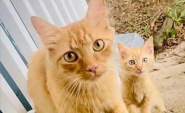 """Illustration : """"Une chatte dépose son chaton dans une maison dans l'espoir d'être aidée. Le lendemain, elle en apporte un deuxième !"""""""
