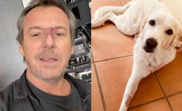 """Illustration : """"L'animateur Jean-Luc Reichmann poste une photo de son chien amputé d'une patte pour livrer un message fort contre l'abandon"""""""