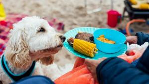 Illustration : Ces 7 aliments prévus pour un barbecue ne sont pas recommandés pour votre chien