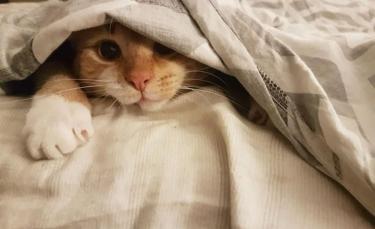 """Illustration : """"20 photos attendrissantes de chats bien installés sous la couverture"""""""