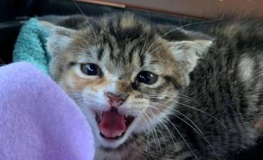 """Illustration : """"La belle évolution d'un chaton errant et terrifié trouvé dans un trou"""""""