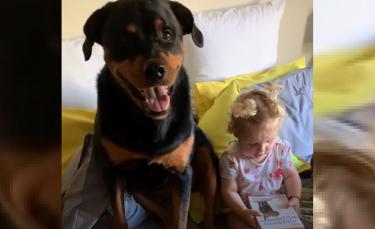 """Illustration : """"Ce Rottweiler dévoué copie tout ce que sa meilleure amie humaine fait !"""""""