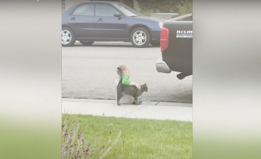 """Illustration : """"Triste, un petit garçon s'assoit seul sur le trottoir. Jusqu'à ce qu'un chat amical s'approche pour le consoler ! (Vidéo)"""""""