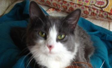 """Illustration : """"Sans nouvelles de son chat depuis 6 ans, une famille reçoit un appel inattendu de la part d'une clinique vétérinaire"""""""