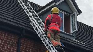 """Illustration : """"En une heure, une unité de pompiers vient au secours de 2 chats en détresse"""""""
