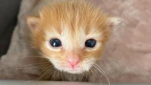 Illustration : La forte volonté de vivre d'un chaton malingre, découvert errant dans la rue