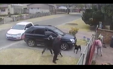 """Illustration : """"L'héroïsme d'un chien blessé par balle après avoir protégé son propriétaire lors d'un vol à main armée"""""""