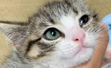"""Illustration : """"Une famille d'accueil fait tout son possible pour soigner et socialiser un chaton errant """""""