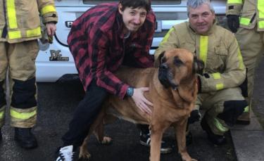 """Illustration : """"Un Bullmastiff met les compétences des pompiers à l'épreuve après s'être coincé sur le toit d'une véranda"""""""