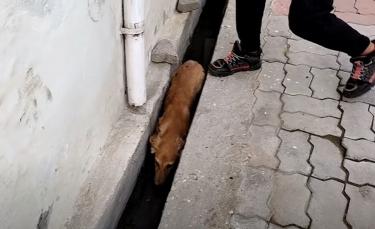 """Illustration : """"Blessée et terrifiée, cette chienne découverte dans un caniveau goûte au bonheur pour la première fois"""""""