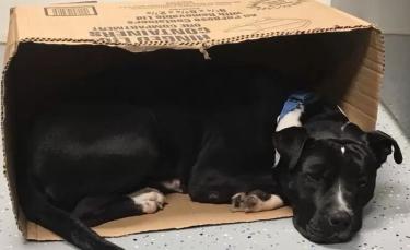 """Illustration : """"Un chien retrouvé effrayé dans la rue ne se sent en sécurité qu'en dormant dans une boîte en carton"""""""