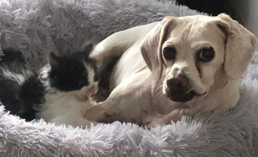 """Illustration : """"Rejeté par sa mère à sa naissance, ce chaton découvre l'amour auprès d'un chien doux et protecteur"""""""
