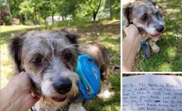 """Illustration : """"Abandonné devant une maison avec un message, ce chien de 13 ans n'aurait jamais cru retrouver l'amour"""""""
