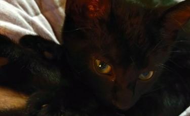 """Illustration : """"Nouveau départ pour un chat secouru sous un pont. Il rend visite à ses sauveurs"""""""