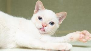 Illustration : Un chaton errant à la démarche bancale fou de joie depuis qu'il a quitté la rue