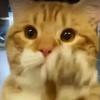 Illustration : Un chat salue tous les visiteurs du refuge en espérant être adopté