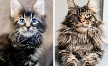 """Illustration : """"17 chiots et chatons mignons qui sont devenus des boules d'amour"""""""