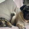 Illustration : Un couple trouve une tortue dans son jardin qui devient la meilleure amie de son chien