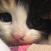 Illustration : Retrouvé seul dans une pépinière, ce chaton avec une patte blessée est déterminé à se remettre sur pied
