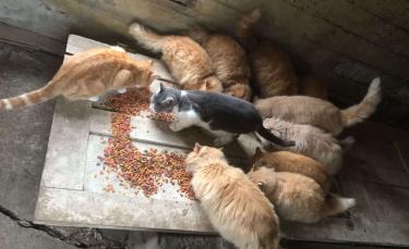 """Illustration : """"En achetant une vieille ferme, un couple découvre 15 chats. Sa réaction est admirable ! (Vidéo)"""""""