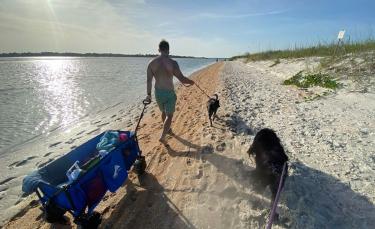 """Illustration : """"20 photos documentant la merveilleuse journée à la plage de 2 chiens adoptés par un couple"""""""